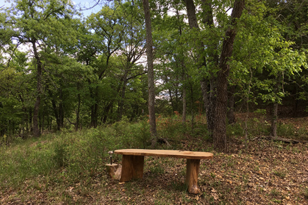 Wooded area Surrounding Cabin