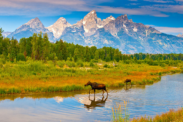 Wildlife in Grand Teton National Park