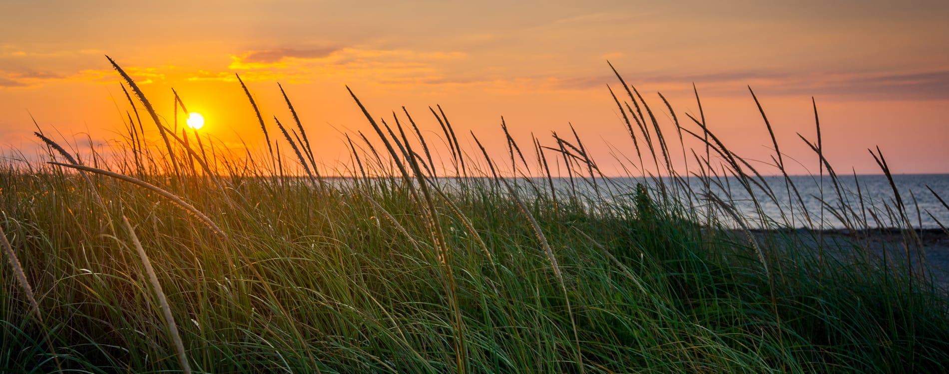 Cape Cod - Wild Grasses