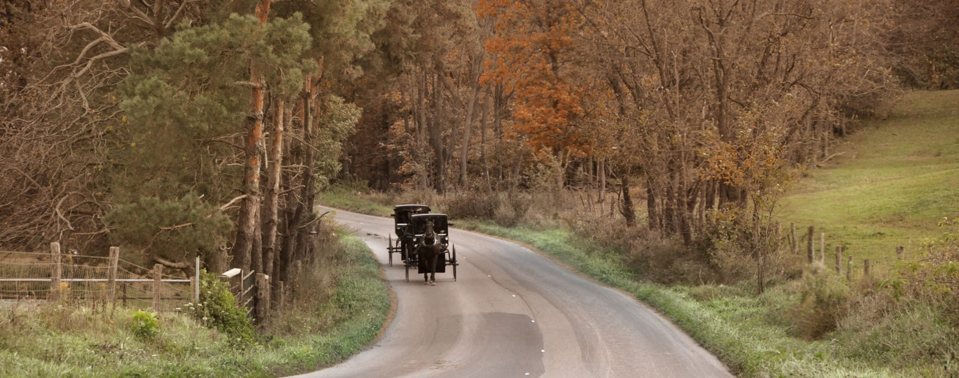Amish Country, OH - Amish Buggy