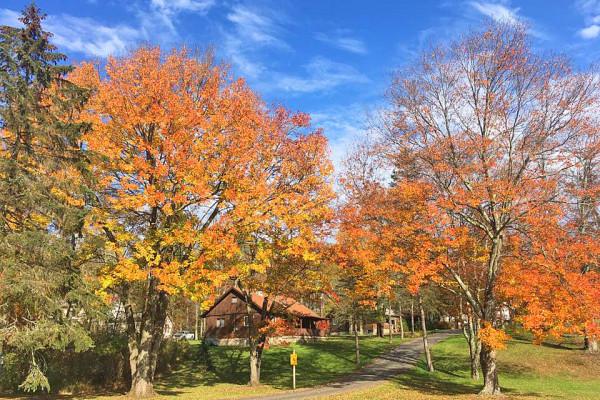 Cabin & Foliage