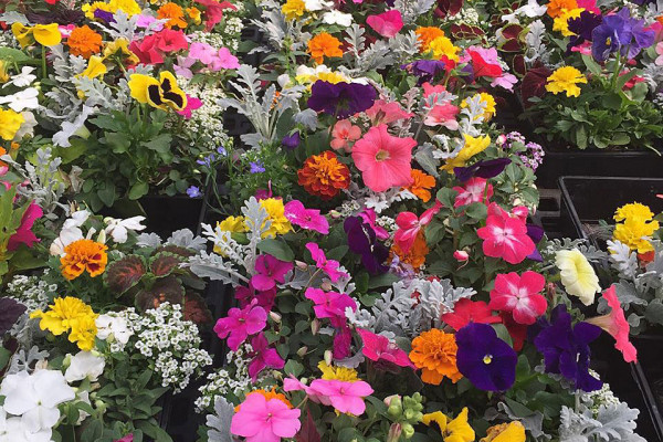 Colorful Gardens