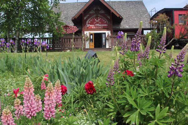 Wildflowers at Resort