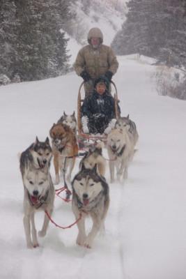 Take a guided sled dog trip