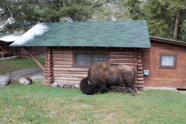 Ranch Visitors