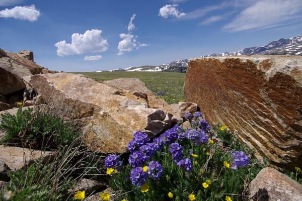 Boulders & Wildflowers
