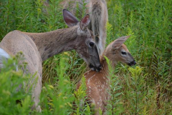 Nearby Wildlife